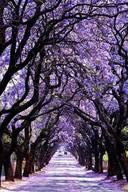 Arborism & Tree Surgery