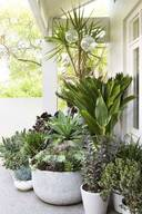 Garden Pots and Plants