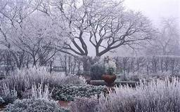How to care for your trees in winter