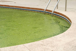 Top tips for controlling swimming pool algae