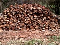 SPECIAL OFFER DRY BRAAI WOOD DELIVERED QUICK Sunninghill Tree Cutting , Felling & Removal 4 _small