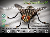 TIRED OF BUZZING AND STINGING Mossel Bay / Mosselbaai CBD Infestation & Fumigation 2 _small