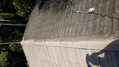 High pressure roof cleaning Durban CBD Concrete water proofing _small