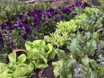 Shepherd Garden Service (Pty)Ltd Showcase Constantia Garden & Landscaping Contractors & Services 4 _small