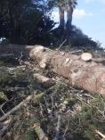Black Friday Discount Northcliff Land Clearing 4 _small