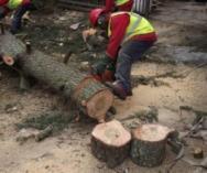 Tree felling Dunkeld Garden Rubbish Removal _small