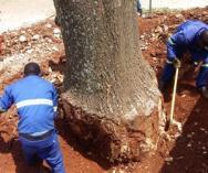 Tree felling Dunkeld Garden Rubbish Removal 3 _small