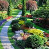 SFS Garden service Centurion Midrand CBD Garden & Landscaping Contractors & Services 3 _small