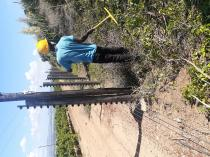 Tree felling services, landscaping, Grass cutting, Garden Services Cape Town Central Tree Cutting , Felling & Removal 3 _small