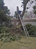 Tree felling special Boskruin Tree Cutting , Felling & Removal 2 _small