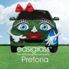 EASIGRASS PRETORIA