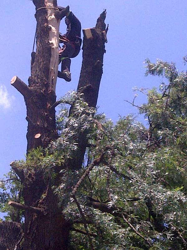 Hazardous tree removal