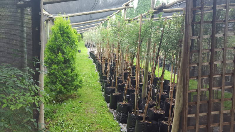 Windy Willows Wholesale Nursery growing area 2