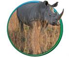 Rhino Slabs & Stairs
