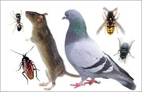 Pest birds & thier dropings can carry over 60 diseases,since many of these diseases are airborne and can be transferred to humans just by cleaning up (without ppe) or being around bird droppings.