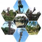 tree felling services western cape